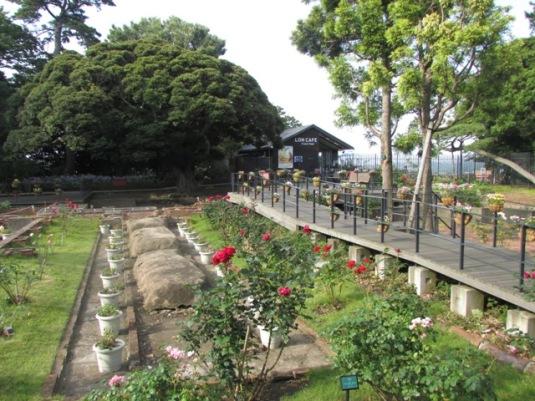 enoshima-16