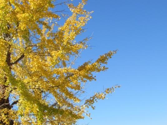 showakinen-autumn-02